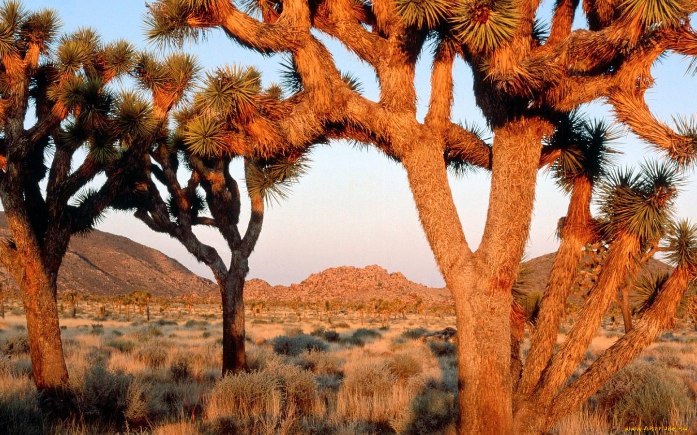 Необычные деревья фотографии